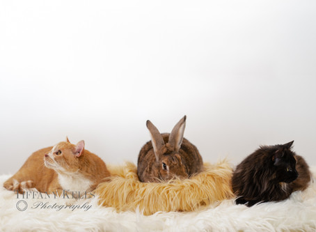 """Lions & Tigers & Bunnies """"OH, MY"""""""