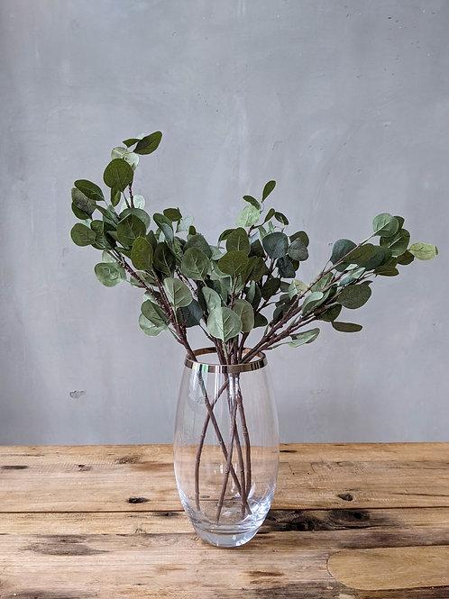 Eucalyptus Pulp Leaves