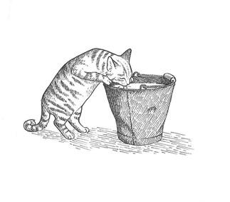 Cat Drinking Milk