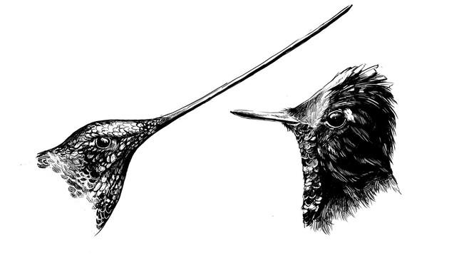Humminbird 5