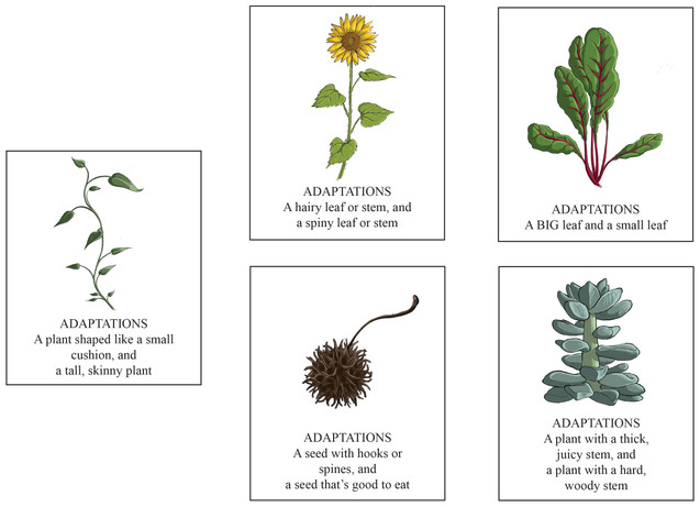 Plant adaption cards
