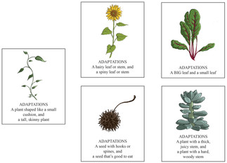 Plant adaption cards