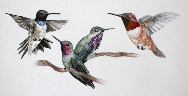 Hummingbird Assortment