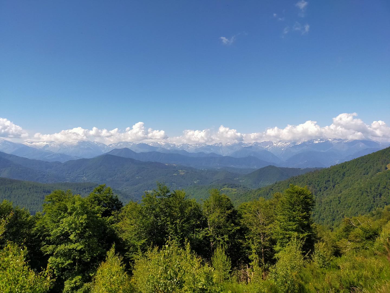 vue montagne et foret.jpg