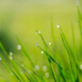 green-lawn-wallpaper_172187-1600x1200.jp