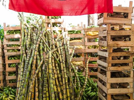 Estaria o projeto de reforma agrária obsoleto ou mais urgente do que nunca?