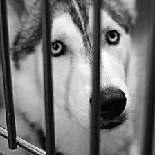 dog in cage2.jpg