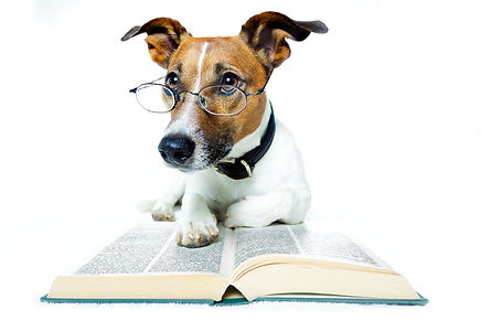 bigstock-dog-and-books-33514622.jpg