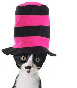 bigstock-Cat-wearing-a-hat-15284588.jpg
