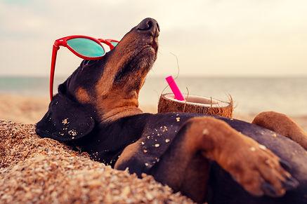 bigstock-Cute-Dog-Of-Dachshund-Black-A-3