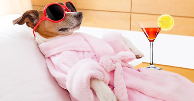 bigstock-Dog-Spa-Wellness-94814387.jpg