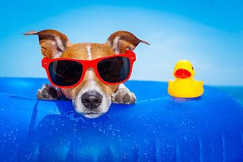 bigstock-Summer-Holiday-Dog-92128484.jpg