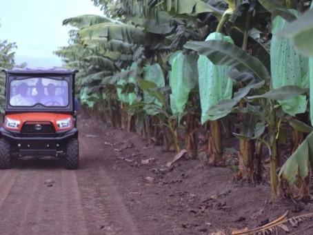 Secretario de Agricultura afirma disponibilidad del plátano local para los consumidores