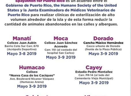 Del 3 al 9 de mayo se llevará a cabo el #Round4 de la iniciativa #FortalezaParaTi #SpayathonPR en lo