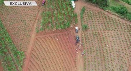 Departamento de Agricultura utilizará Drones para monitorear cultivos
