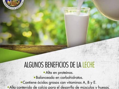 Algunos benefiicos de la leche