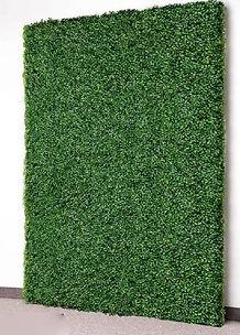 Boxwood Hedge.JPG