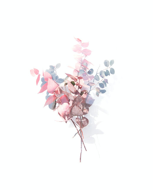 pink-grey-and-white-petaled-flowers-clip