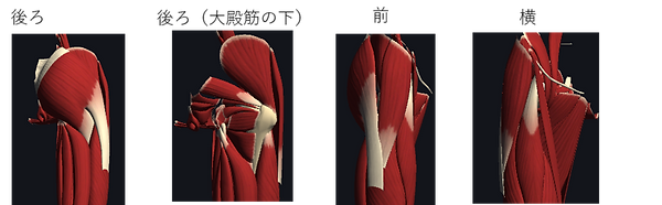 股関節周囲の筋肉.png