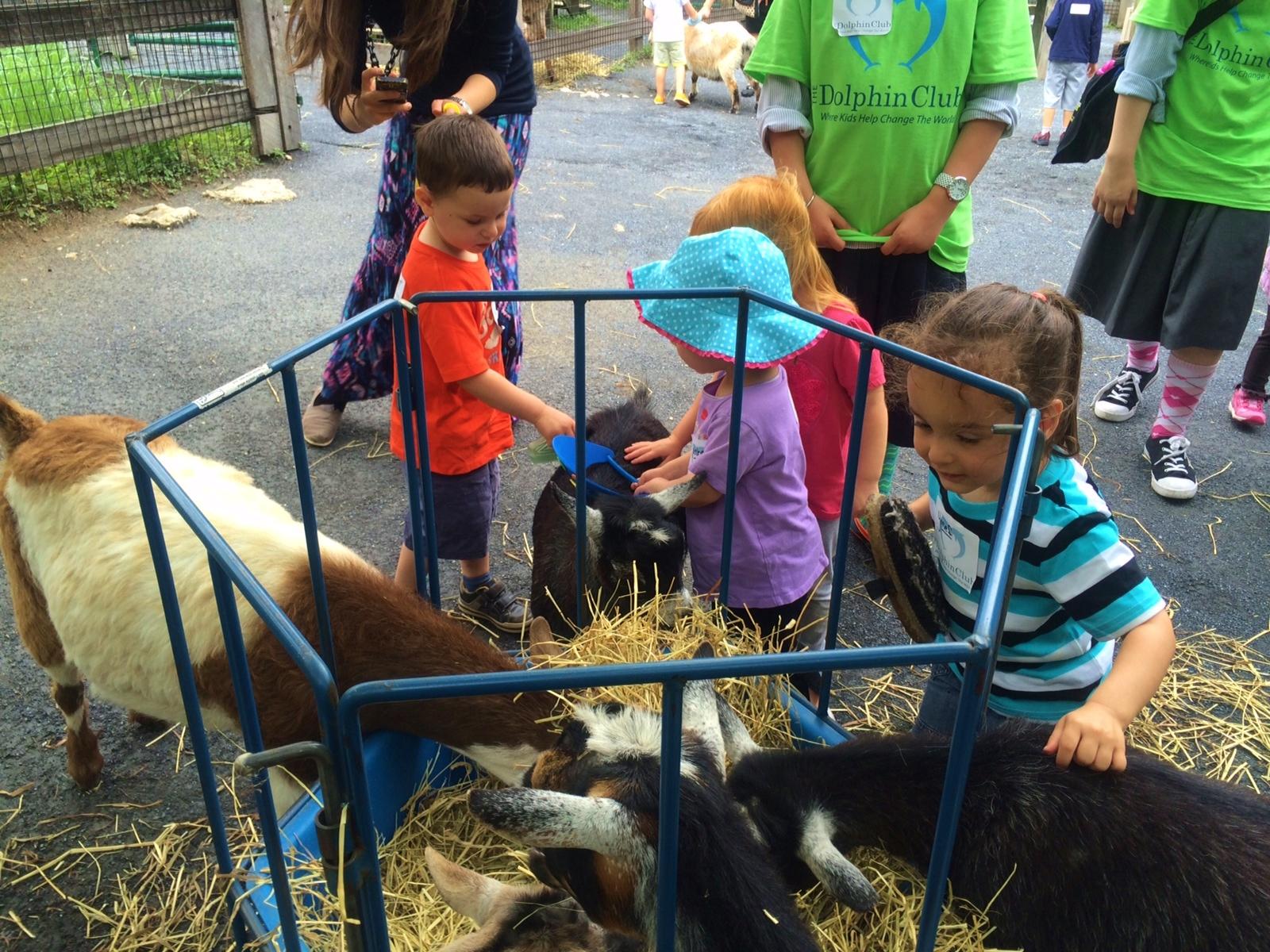 Petting zoo 2