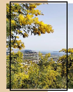 Route du mimosa - Affiche.jpg