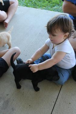 Jonah with Cooper x Gabby pup (1st litter)