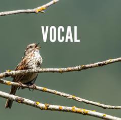 Vocal SoundCloud.png