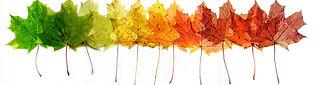 fall-header.jpg