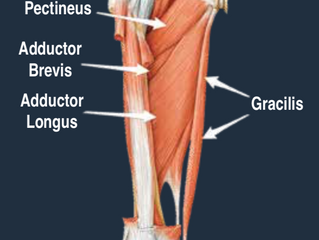 Chronic Groin Pain (Athletic Pubalgia)