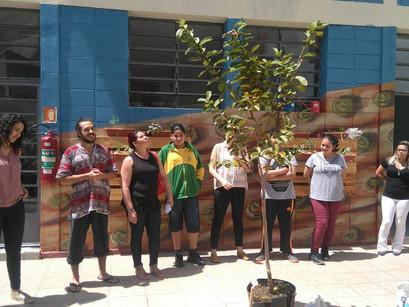 CREN Vila Mariana planta primeira árvore frutífera