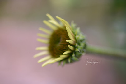 Blume in meinem Garten