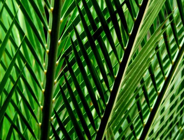paris 13 leaves.jpg