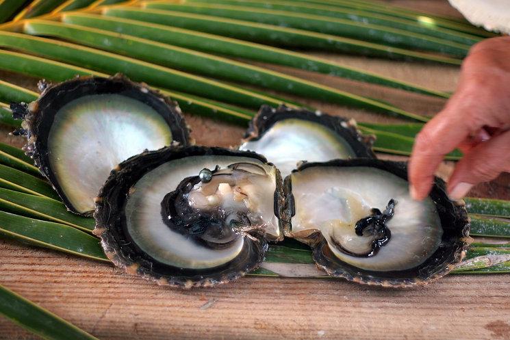 Perla de cultivo de la Polinesia Frances