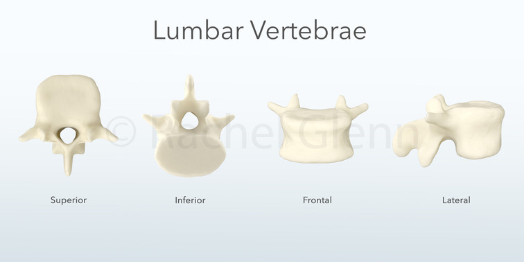 Angles of a Lumbar Vertebrae