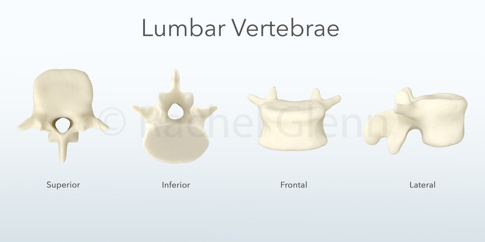 Angles of a Lumbar Vertebrae