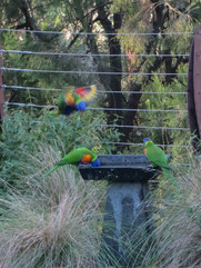 Ims, Subille - birds in flight.jpg