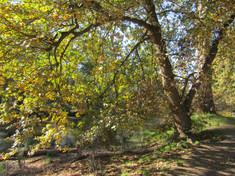 Thompson, Mary - After Autumn Yarra River.jpeg