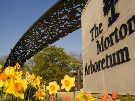 See the Morton Arboretum App in Action