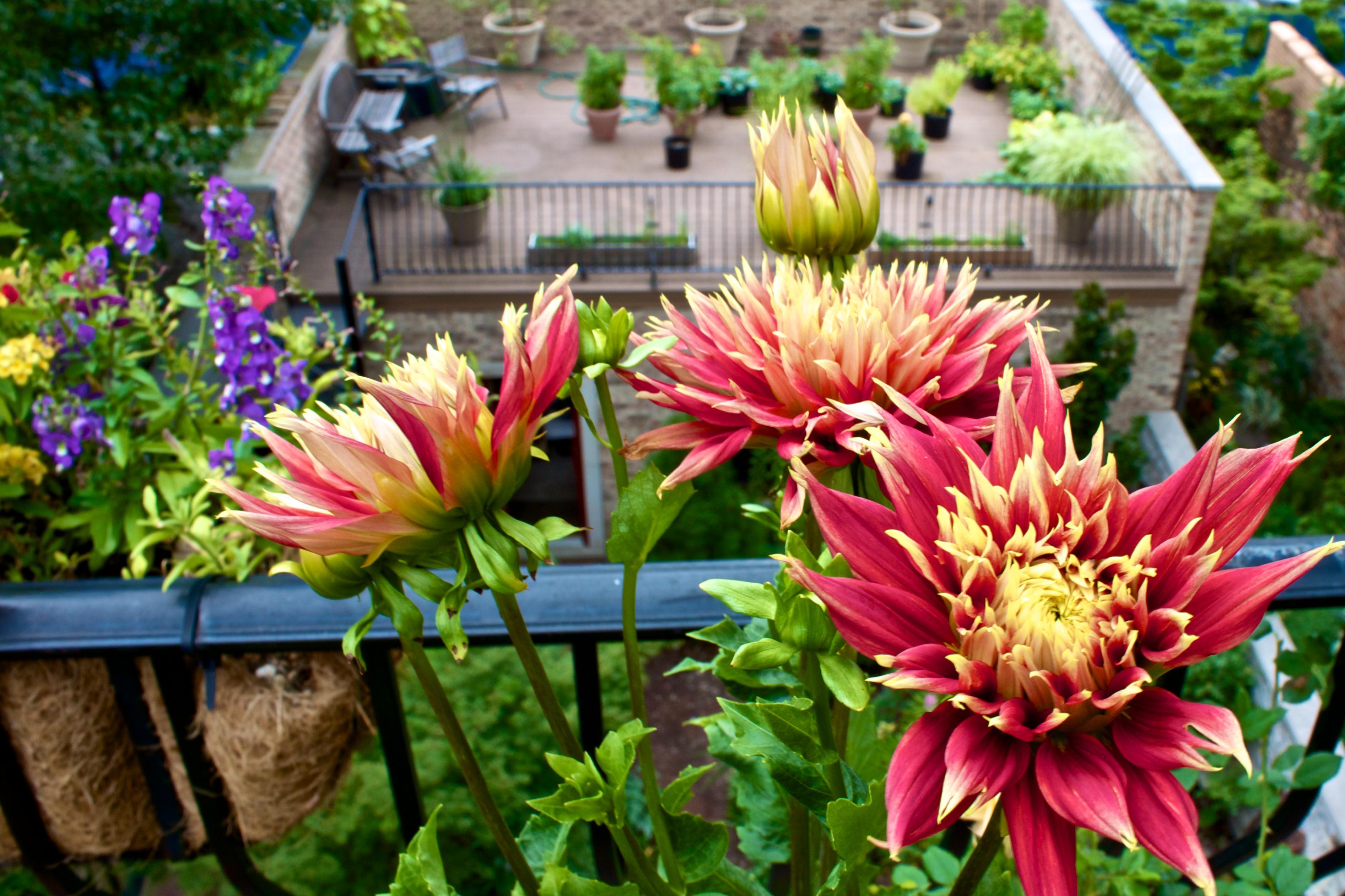 J. Kochevar garden 2