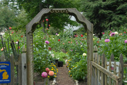 Rick Peter's Garden