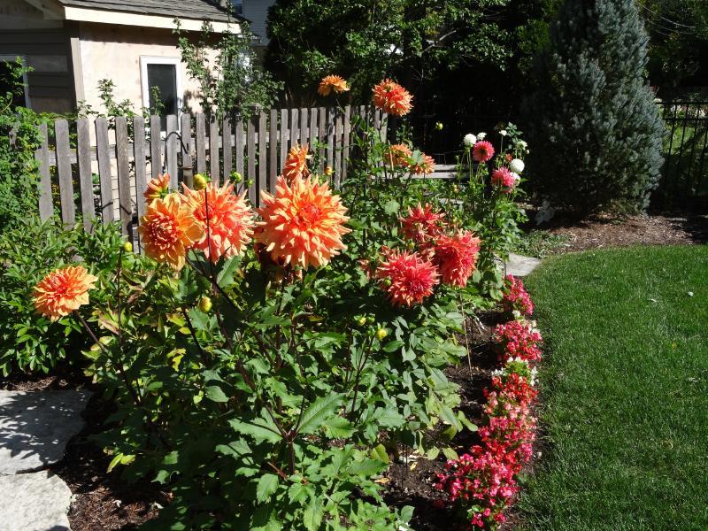 Judy Standefer garden