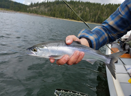 Truckee Tahoe Area Fly Fishing Report May 31st, 2019