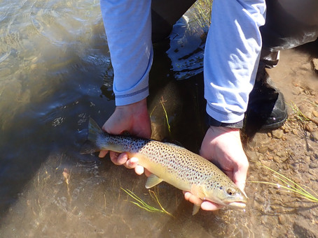 Truckee Tahoe Area Fly Fishing Report June 28th, 2019