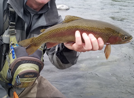 Truckee Tahoe Fly Fishing Report September 27th 2019