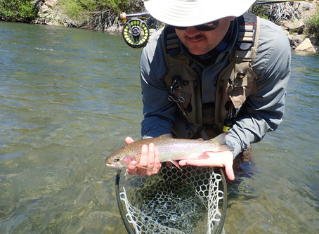 Truckee Tahoe Fly Fishing Report July 18, 2020