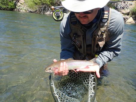 Truckee Tahoe Fly Fishing Report July 18, 2020