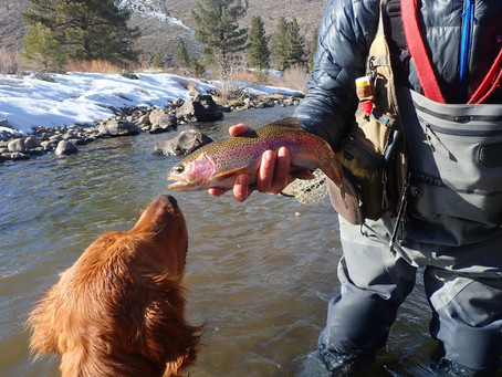 Truckee Tahoe Fly Fishing Report February 28th,  2021