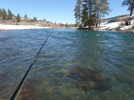 Truckee River Fly Fishing Report March 30, 2019