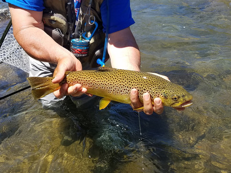 Truckee Tahoe Area Fly Fishing Report July 17th, 2019