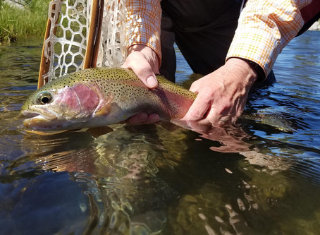 The Fly Fishing Report For May 31st, 2020